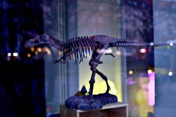 Os modos narrativos são como esqueleto de dinossauro desta imagem. Cada osso depende do outro para manter a estrutura funcionando.
